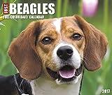 Just Beagles 2017 Box Calendar (Dog Breed Calendars)