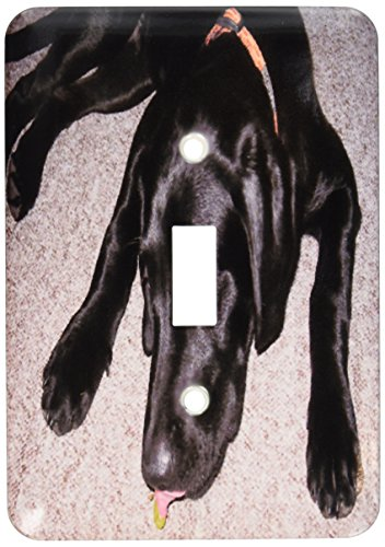 3dRose lsp_50180_1 Black Lab Eating Grape Single Toggle Switch