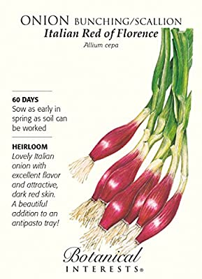 Italian Red of Florence Bunching Onion Seeds - 1 gram