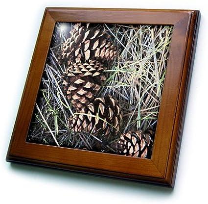 US27 CHA0846 Chuck Haney 8 by 8-Inch 3dRose ft/_91640/_1 Ponderosa Pine Cone Flora in Grasslands Framed Tile