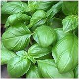 Basilic grand vert 100 graines