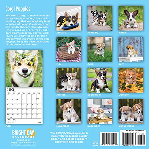 Corgi Puppies 2019 16 Month Wall Calendar 12 x 12 Inches by Bright Day Calendars (Image #1)