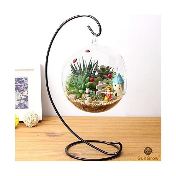 Sungrow 3 Hanging Glass Terrariums By Spherical Air Plant Orb