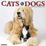 Cats & Dogs 2019 Wall Calendar