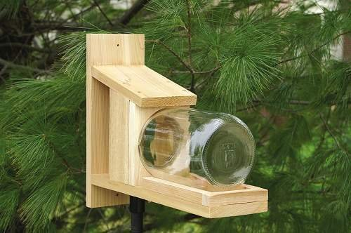 Songbird Essentials- Sescs412 Squirrel Jar Bird Feeder