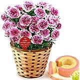 母の日 の プレゼント カーネーション鉢花とバウムクーヘン 5号鉢 花とスイーツギフト (オルフィカ)