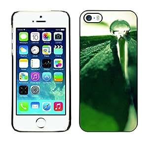Estuche Cubierta Shell Smartphone estuche protector duro para el teléfono móvil Caso Apple Iphone 5 / 5S / CECELL Phone case / / Plant Nature Forrest Flower 85 /
