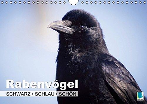 Rabenvögel – Schwarz, schlau, schön (Wandkalender 2015 DIN A4 quer): Rabenvögel: Ist der Ruf erst ruiniert (Monatskalender, 14 Seiten) (CALVENDO Tiere)
