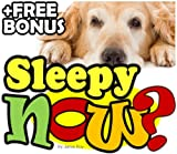 Are You Sleepy Now, Doggy? (Good Night Sleep Tight   Bedtime Stories for Children Book 1) (English Edition)
