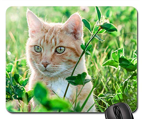 Mouse Pad - Nature Cat Field Meadow Grass Animal Pet