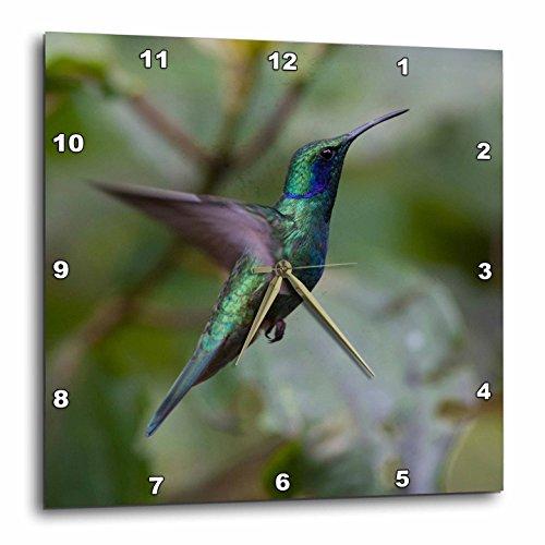 3dRose DPP_206797_1 Green Violet-Ear Hummingbird Monteverde Costa Rica Central America Wall Clock