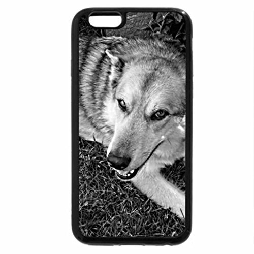 iPhone 6S Plus Case, iPhone 6 Plus Case (Black & White) - dog on grass