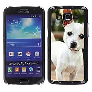 TopCaseStore / la caja del caucho duro de la cubierta de protección de la piel - Cute Chihuauah Dog - Samsung Galaxy Grand 2 SM-G7102 SM-G7105