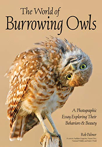 The World of Burrowing Owls: A Photographic Essay Exploring Their Behaviors & Beauty