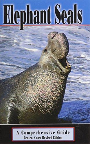 elephant seals - 1