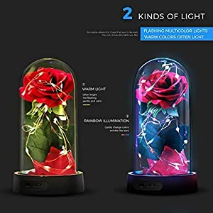 ucho Beauty and The Beast Rose,Enchanted Red Silk Rose Lamp with Fallen Petals Last Forever & LED Fairy String,Best Gift for Her,Valentine's Day Wedding Anniversary