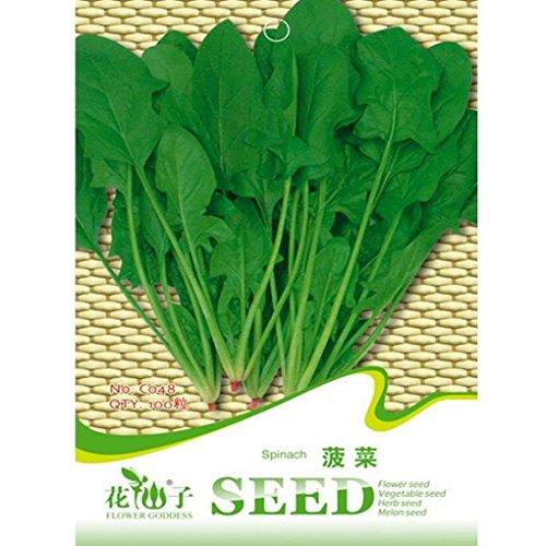 [Garden Spinach Seeds Salad Leaves Vegetable 100pcs] (Ramen Noodle Costumes)