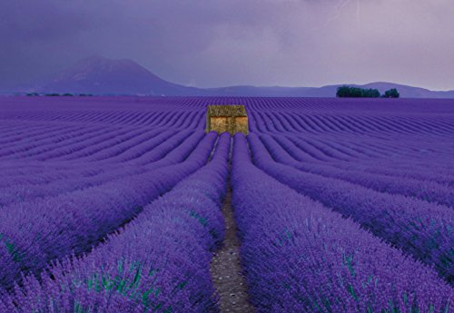 (Ideal Décor WG5148-4P-1 Field Of Lavender Wall Mural, Purple)