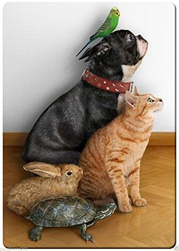 Animals funny looking action fridge magnet 3