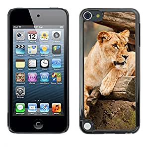 Super Stella Slim PC Hard Case Cover Skin Armor Shell Protection // M00145554 Africa Animal Big Brown Carnivore // Apple ipod Touch 5 5G 5th