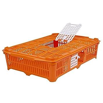 Aves Caja de transporte para palomas/wachteln, Naranja, 67 x 40 x 13 cm: Amazon.es: Jardín