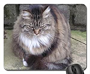 Big Fluffy Cute Cool Decorative Design Animal Cat Mousepad Rainbow Designs