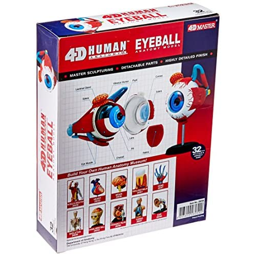 Tedco Human Anatomy - Eyeball Anatomy Model hot sale - sergdamask.com