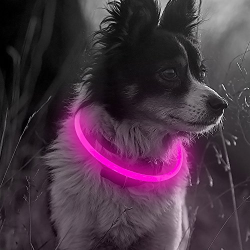 Illumifun Led Dog Collar