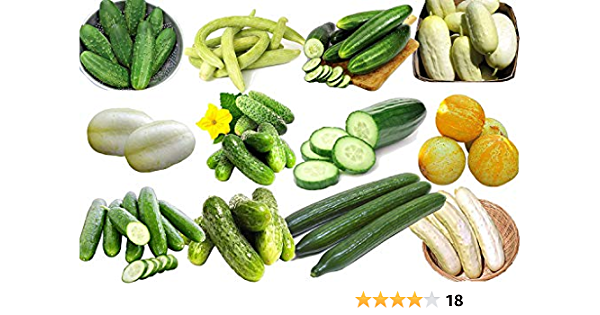 50 Cucumber Seed Non-GMO Long Giant Straight Fresh Rare Organic Vegetable Garden