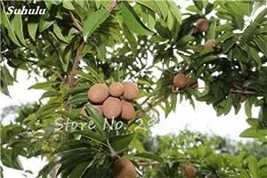 Las semillas del árbol del zapote de frutas raras 30 piezas de fruta del corazón para Manilkara zapota el jardín japonés de la planta dulce forma como una Mango.fruit