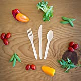 Transitions2earth Biodegradable EcoPure Forks - Box of 500 - Plant a Tree With Each Item