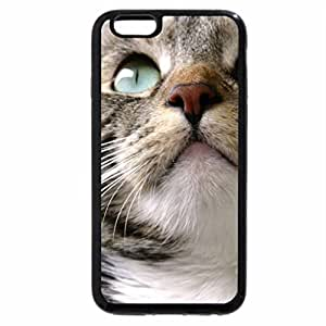 iPhone 6S / iPhone 6 Case (Black) CLOSE UP KITTY