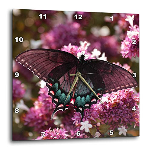 3dRose Stamp City - Insects - Photo of a Female Tiger Swallowtail on an abelia Bush in Pink and Teal - 15x15 Wall Clock (DPP_306495_3) ()