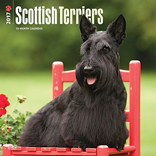 "Scottish Terriers 2017 Wall Calendar 12"" x 12"""