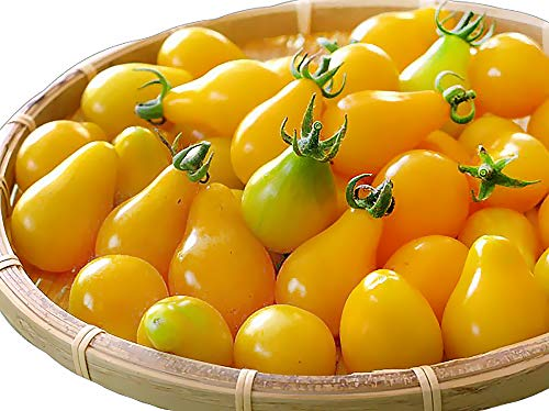 50+ ORGANICALLY Grown Yellow Pear Tomato Seeds, Heirloom Non-GMO, Low Acid, Indeterminate, Open-Pollinated, Sweet, Super Delicious, from USA