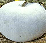 Winter Melon Round, Wax Gourd SEEDS - Tong Qwa - Very Popular In Asian Soup Dishes - 15 to 20+ LBs - Approx. 85-100 Days - By MySeeds.Co (10 Seeds - Pkt. Size)