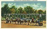 Saratoga Springs, New York - Saratoga Race Track Starting Line View (12x18 Collectible Art Print, Wall Decor Travel Poster)