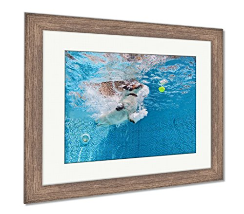 Ashley Framed Prints Playful Jack Russell Terrier Puppy In Swimming Pool Has Fun Dog Jump And Dive, Wall Art Home Decoration, Color, 26x30 (frame size), Rustic Barn Wood Frame, AG4998001