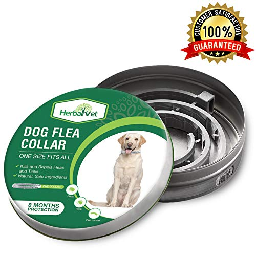 HerbalVet Dog Flea Collar for Flea and Tick Treatment and Prevention for Dogs| One Size Fits All, 100% Natural Oils, 100% Waterproof, 8 Month Essential Oil Flea Collar | Helpful E-Book Included (Best Flea & Tick Collar For Dogs)