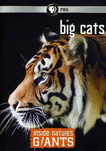 Inside Nature's Giants: Big Cats