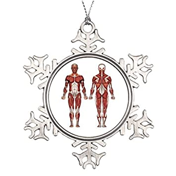 amazon metal ornaments muscles xmas trees decorated anatomy big Pully Window Anatomy image unavailable