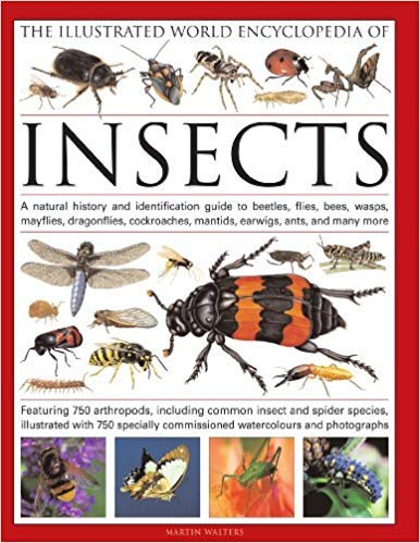 [0754819094] [9780754819097] The Illustrated World Encyclopedia of Insects: A Natural History and Identification Guide to Beetles, Flies, Bees, wasps, Springtails, Mayflies, ... Crickets, Bugs, Grasshoppers, Fleas, Spide-Hardcover