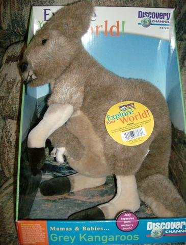 discovery-channel-explore-your-world-mamas-babies-grey-kangaroos-rumby-joey