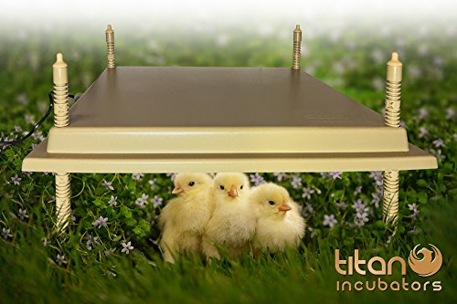 poultry heater - 8
