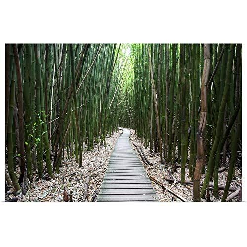 GREATBIGCANVAS Poster Print Entitled Hawaii, Maui, Kipahulu, Haleakala National Park, Trail Through Bamboo Forest by Jenna Szerlag 18