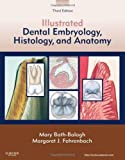 img - for Illustrated Dental Embryology, Histology, and Anatomy, 3e 3rd by Bath-Balogh BA BS MS, Mary, Fehrenbach RDH MS, Margaret J (2011) Paperback book / textbook / text book