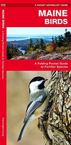 Maine Birds: A Folding Pocket Guide to Familiar Species (A Pocket Naturalist Guide) (Star Pocket Ri)