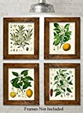 Kitchen Botanicals Art Print - Set of 4 11x14 Unframed Art Prints - Great Kitchen Decor and Gift for Nature Lovers