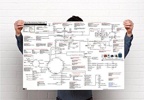 Medical Biochemistry Pathways Poster, Gloss Finish