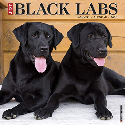 Just Labs - Just Black Labs 2020 Wall Calendar (Dog Breed Calendar)